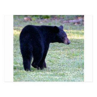 va black bear postcard