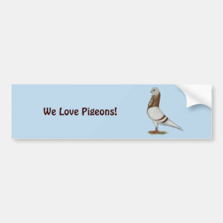 Valencian Figurita Pigeon Bumper Sticker