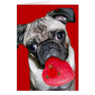 Valentine s Day pug greeting card