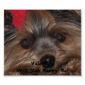 Valentine Yorkie Will You Marry Me? Poster