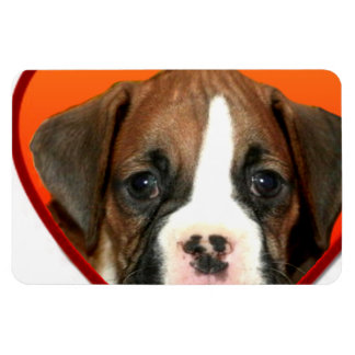 Valentine's boxer puppy rectangular photo magnet