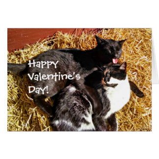 Valentine's Day Card with Cats