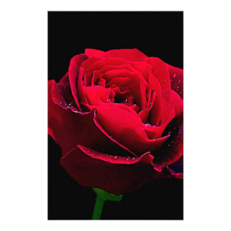 Valentines Day Red Rose Personalized Stationery