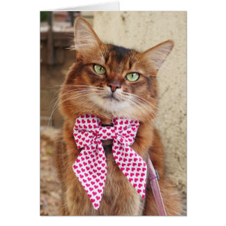 Valentine's Day Somali Cat with Hearts Bowtie Card