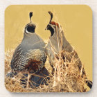 Valley Quail (California) Coaster