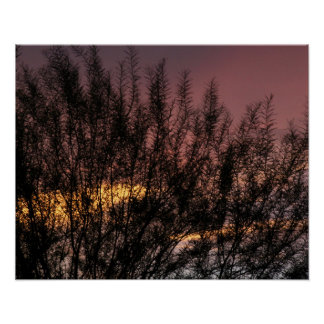 Value Poster Paper (Matte) SUNSET TREE PHOTOGRAPH