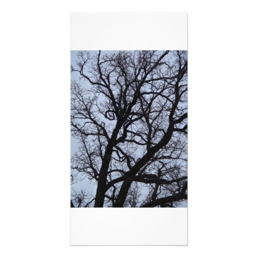 Vampire Tree Photo Greeting Card