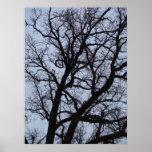 Vampire Tree Posters