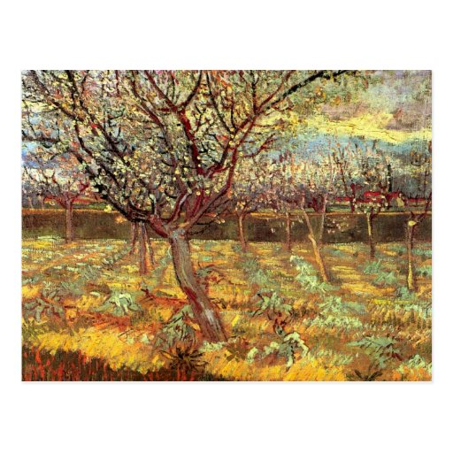 Van Gogh; Apricot Trees in Blossom, Vintage Art Postcards