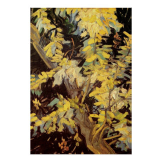 Van Gogh Flowers Art, Blossoming Acacia Branches Posters