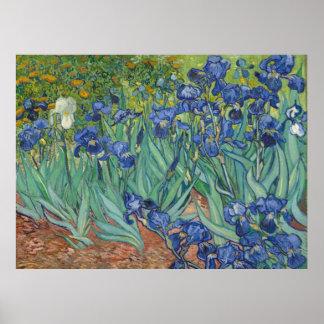 Van Gogh Irises (F608) Fine Art Poster