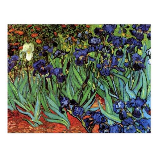 Van Gogh Irises, Vintage Post Impressionism Art Postcards