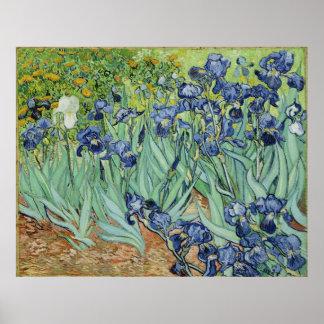 Van Gogh Irises, Vintage Post Impressionism Art Poster