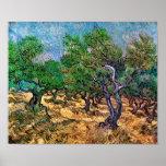 Van Gogh - Olive Grove Poster