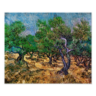Van Gogh - Olive Grove Poster