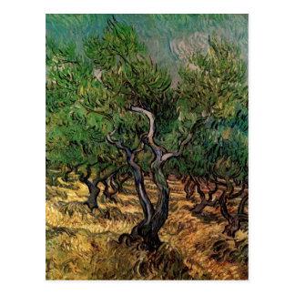 Van Gogh Olive Grove, Vintage Landscape Fine Art Postcard