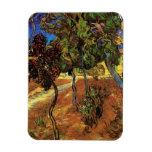 Van Gogh Trees in the Garden, Saint Paul Hospital