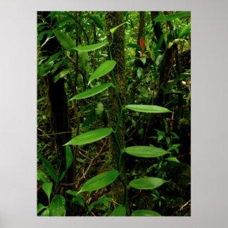 Vanilla Orchid Vine Poster