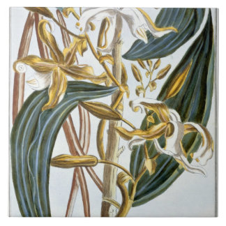 Vanilla pods, plate 65, from 'Collection Precieuse Tile