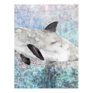 Vaquita River Dolphin Endangered Animal Painting Postcard