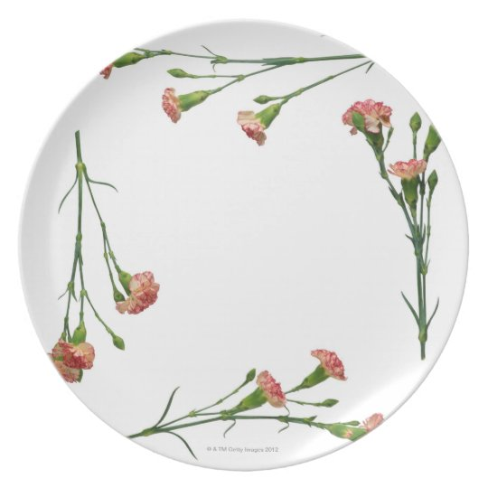 Variegated Carnation Frame Plate
