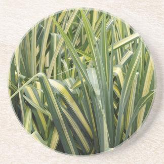 Variegated Sedge Grass Coaster