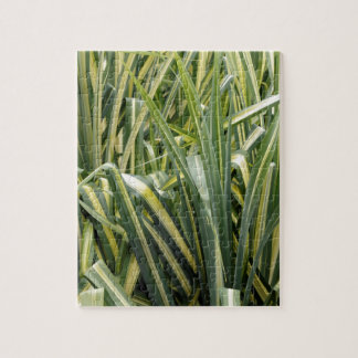 Variegated Sedge Grass Jigsaw Puzzle