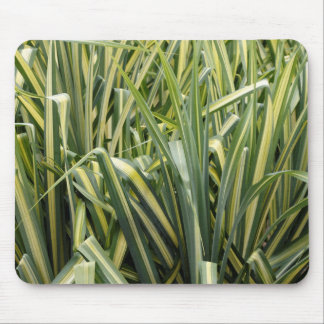 Variegated Sedge Grass Mouse Pad