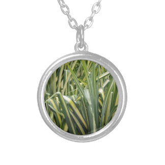 Variegated Sedge Grass Silver Plated Necklace