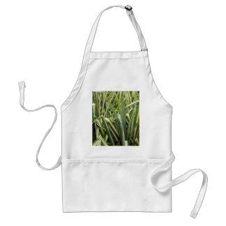 Variegated Sedge Grass Standard Apron