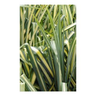 Variegated Sedge Grass Stationery