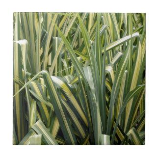 Variegated Sedge Grass Tile