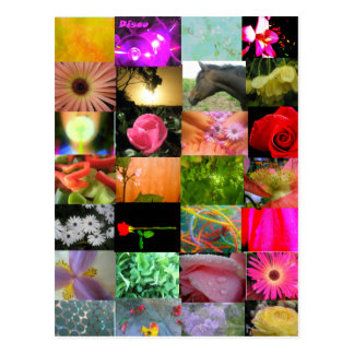 Variety Collage Postcard