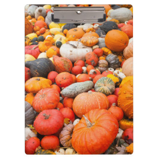 Variety of squash for sale, Germany Clipboard