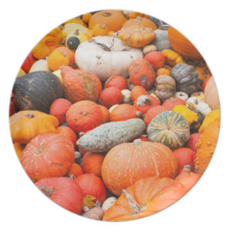 Variety of squash for sale, Germany Plate