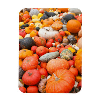 Variety of squash for sale, Germany Rectangular Photo Magnet