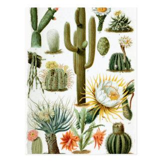 Various_Cactaceae Postcard