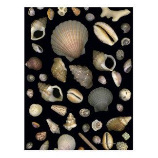 Various sea shells postcard