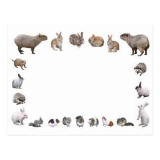 Various small animals postcard