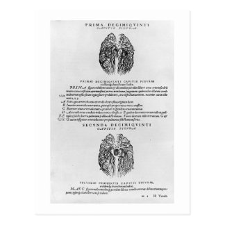Vascular system of the brain postcard