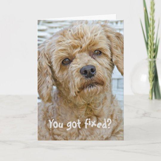 Vasectomy Dog Humour Card