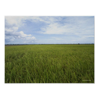 vast open rice fields poster