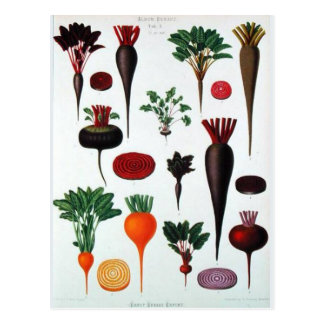 Vegetables - Bénary Postcard