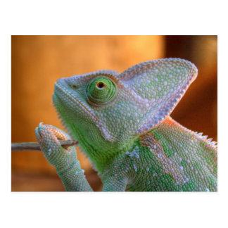 Veiled Chameleon Postcard