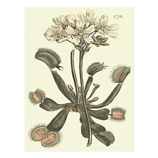Venus Flytrap Botanical Illustration Postcard