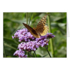 Verbena and butterfly notecard