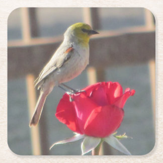 Verdin on Rose Square Paper Coaster