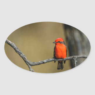 Vermillion Flycatcher Accessories and Gifts Oval Sticker