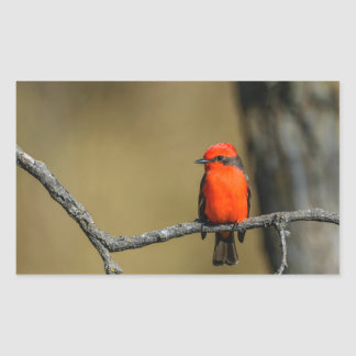 Vermillion Flycatcher Accessories and Gifts Rectangular Sticker