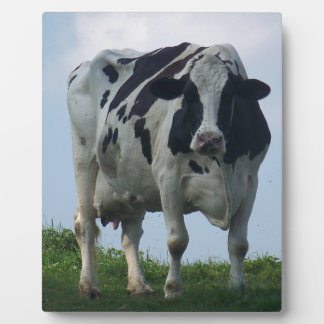 Vermont  Black and White Dairy Cow Plaque